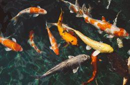 peixes surpresos com água